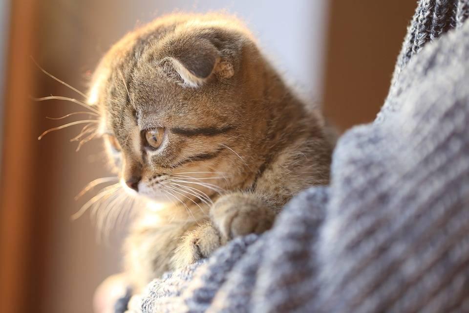 如何让你的猫活的更久一点,以及猫咪年龄对照表