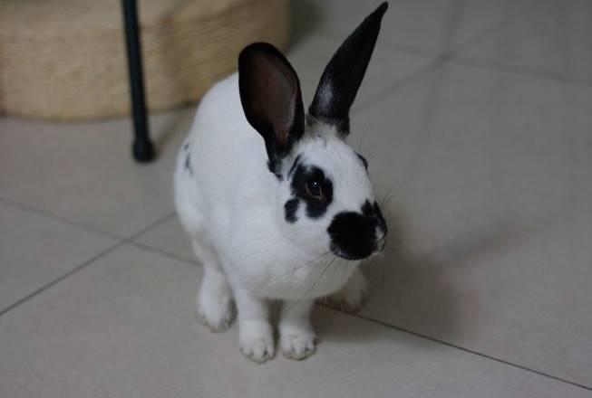 兔子成年后还需要吃球虫药吗