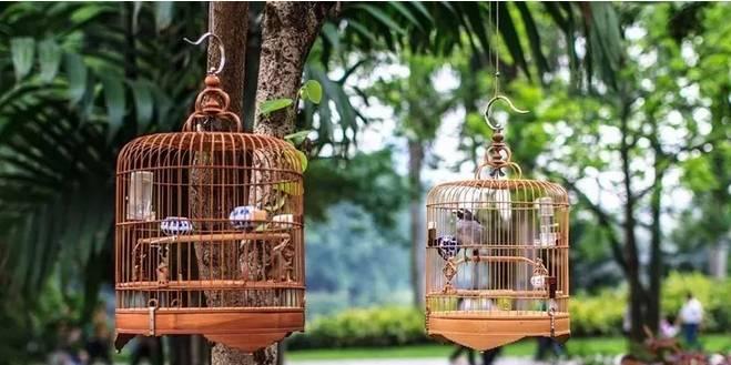 怎么养鸟--鸟食篇
