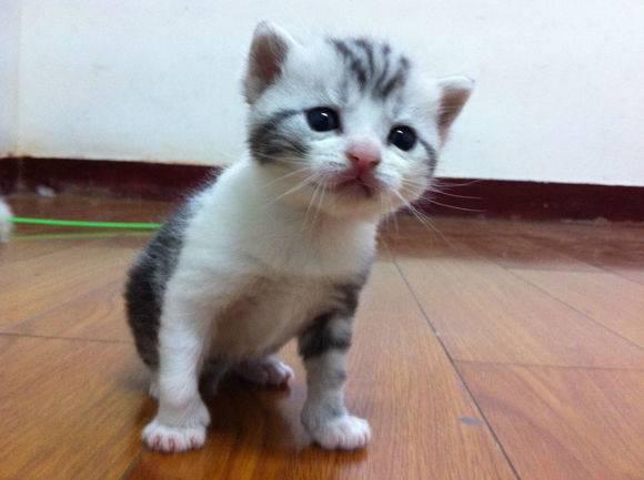 幼猫怎么养,2至6月幼猫喂养方法 新手铲屎官记得收藏!